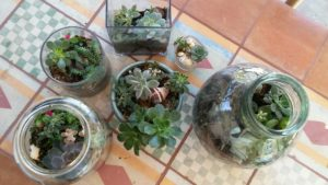 projects: terrariums